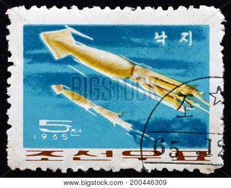NORTH KOREA - CIRCA 1965: a stamp printed in North Korea shows Japanese Common Squid Todarodes Pacificus circa 1965