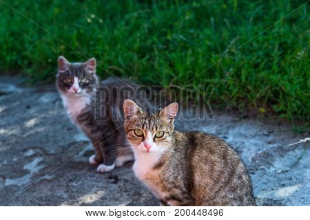 two village cat basking in the summer sun.