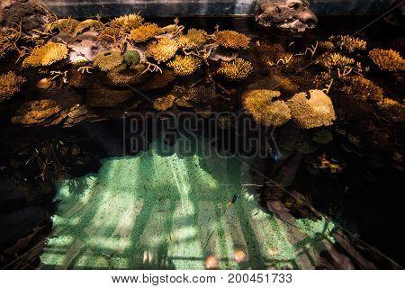 Aquarium Plants And Flora. Lisbon Aquarium.