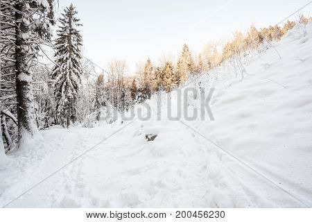 There is a lot of snow in the woods