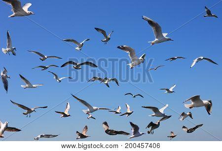 seagulls in blue sky over black sea