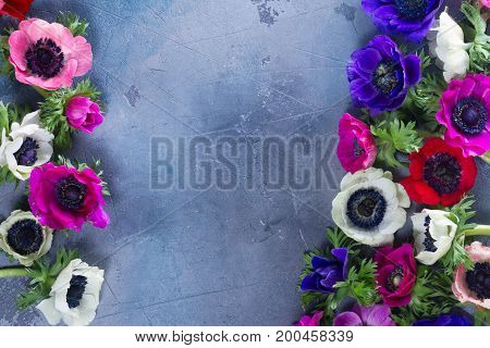 Fresh blooming Anemones flowers border on gray stone background