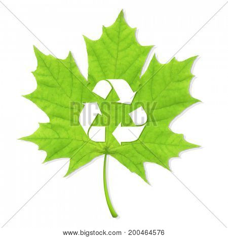 Recycle Green Leaf