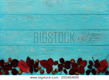 Flat lay frame of autumn crimson leaves and walnuts on a wooden background of azure color. Selective focus.