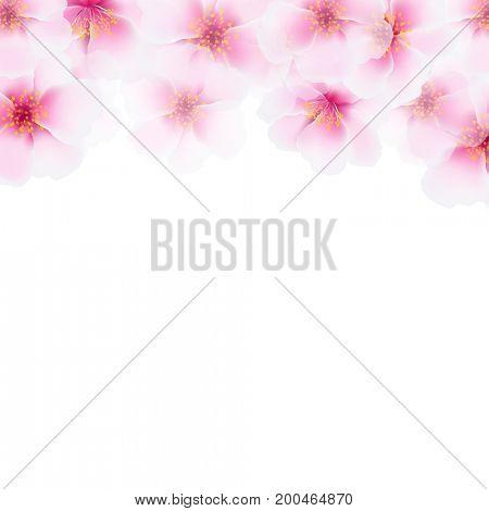 Pink Cherry Flower Border