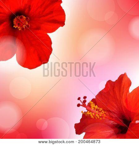 Summer Flowers Poster