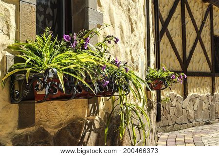 Street floristic decor - row of Petunia flowers in pots on the window