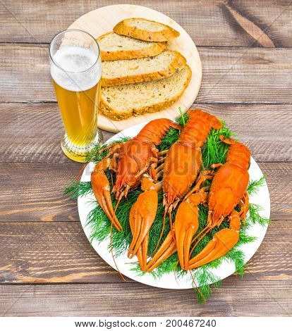 Boiled red crawfish on a white plate with green fennel on a white wooden background. Tasty red steamed crawfish closeup with glass of beer on wood table, seafood dinner, nobody. Copy space for text.
