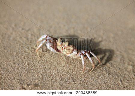 Small crab on the ocean shore. Kenya