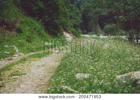 Mountain Trail And Flowers