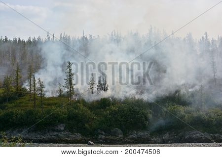 Forest fires. Northern forest fire and smoke.