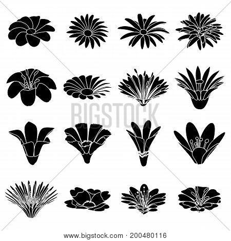 Detailed flower icons set. Simple illustration of 16 detailed flower vector icons for web