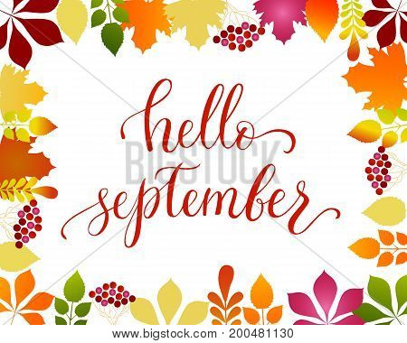 Vector lifestyle lettering Hello September with autumn leaves. Hello September brush ink typography for photo overlays,  greeting cards, flyer, poster design, logo, banner.