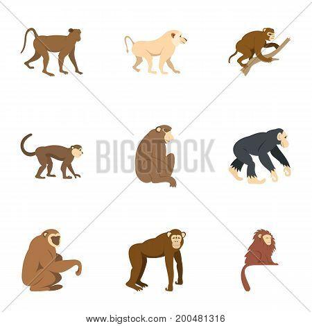 Monkey icon set. Flat set of 9 monkey vector icons for web isolated on white background