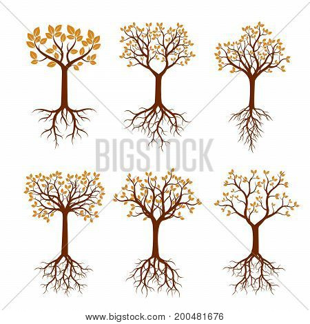Set of autumn Trees with Roots. Vector Illustration.