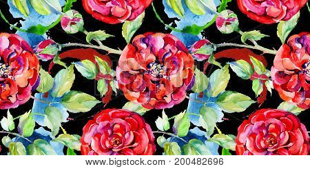 Wildflower rose flower pattern in a watercolor style. Full name of the plant: rose. Aquarelle wild flower for background, texture, wrapper pattern, frame or border.