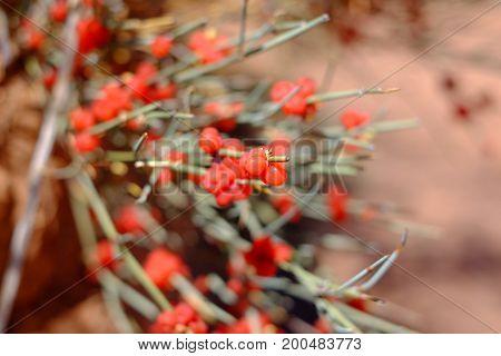 Dangerous Red Berries