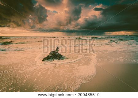 Baltic sea coast at dramatic sunset time with trunks and tree roots in water on empty shore clear yellow sand. Natural background.