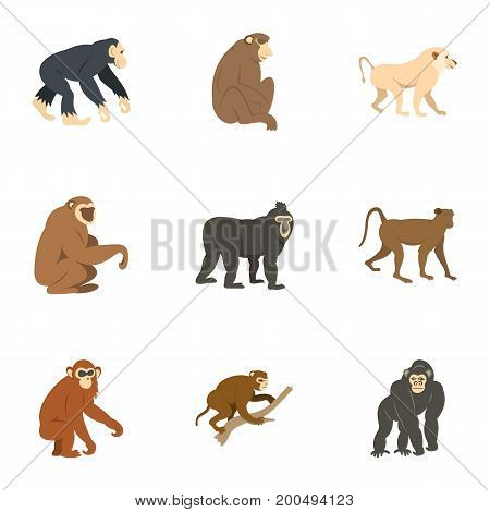 Species of monkey icon set. Flat set of 9 species of monkey vector icons for web isolated on white background