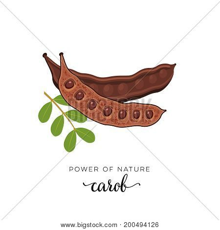 Superfood fruit. Carob pod bean with seeds and twig with leaves. Vector illustration cartoon flat icon isolated on white.