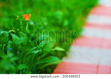 Diagonal path with left aligned orange flower background hd