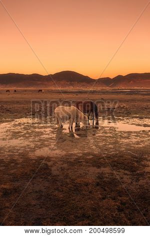 Horse in Napa lake located at Shangri-la China