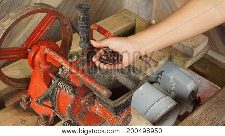 Woman hand sticking cocoa beans into an electric mill. Grinding the cocoa beans is a part of the process for making handmade chocolate