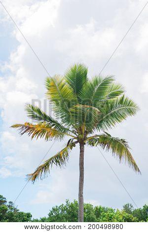 Palm tree with blue skies island life
