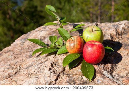 Three fresh apples on big old stone