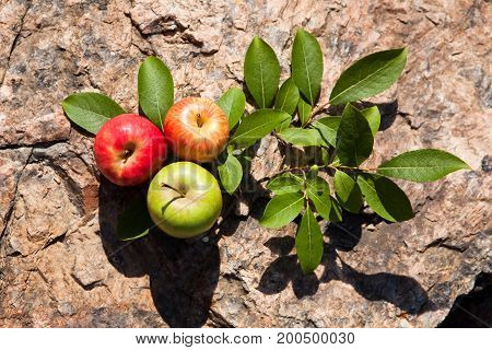 Fresh Apples On Big Stone