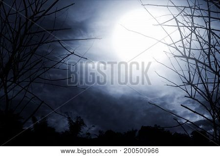 Horror background view of spooky forest at night. Copy space.