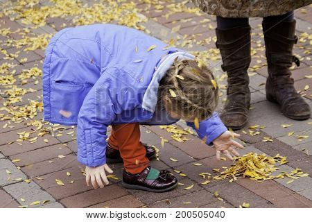 Burlington, Vermont - November 11, 2013 - Wide view of a little girl playing with leaves on the main street of the