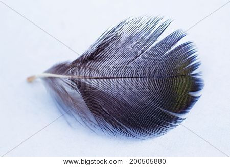 black and white feather. black feather on white background