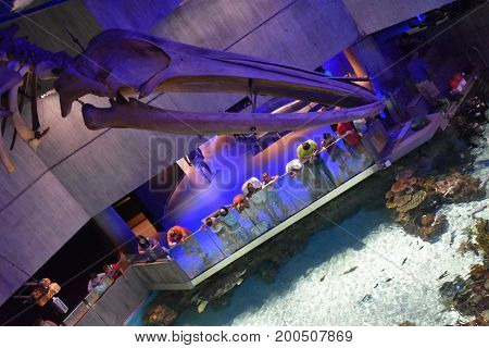 BALTIMORE, MARYLAND - JUL 2: The National Aquarium at the Inner Harbor in Baltimore, Maryland, as seen on July 2, 2017. The Harbor is a historic seaport, tourist attraction and landmark.