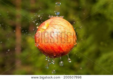 Fresh Apple With Water Splashing