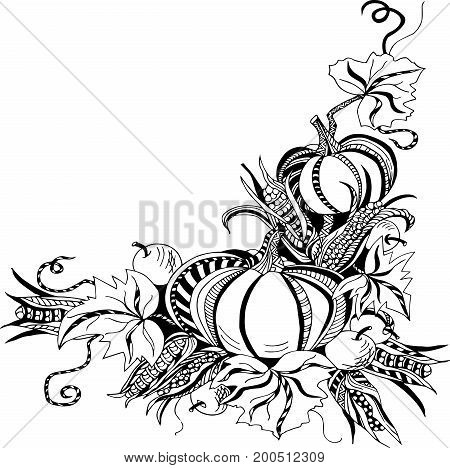 Hand drawn template with pumpkins, corn and apples. Vector