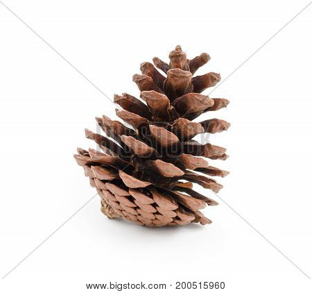 Pine cone isolated on white background (clipping path included) for Christmas decoration holiday decorative concept
