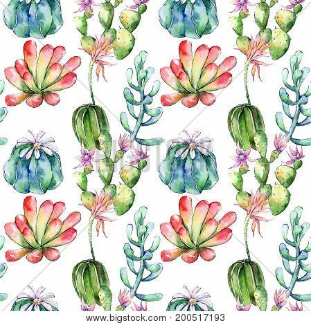 Wildflower cactuses flower pattern in a watercolor style. Full name of the plant: cactuses. Aquarelle wild flower for background, texture, wrapper pattern, frame or border.
