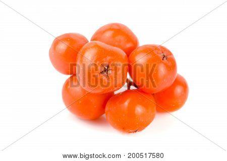 Orange rowan isolated on white background macro.