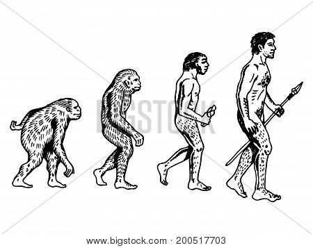 Human evolution engraving vector illustration. Scratch board style imitation. Hand drawn image.