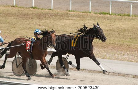 Racing Hippodrome, A Confrontation Between Two Horses,