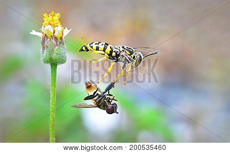 yellow jacket wasp flying from beautiful flower.