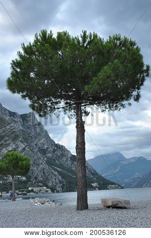 Single tree and stone bench in Limon, lakeshore of lake Garda