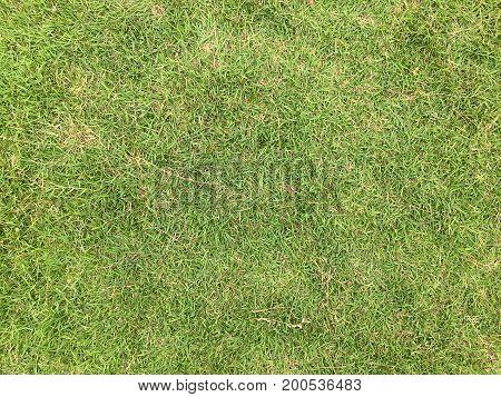 Fresh Spring Green Grass. Natural Background Texture.