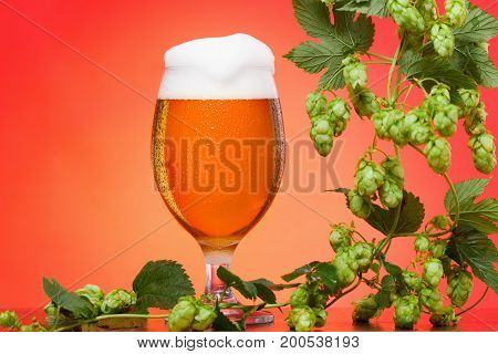 Octoberfest beer glass with hops on red background.