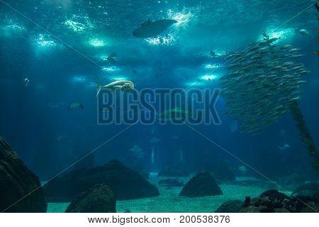 Fishes inside Blue Aquarium Tank, Animal and Nature Theme