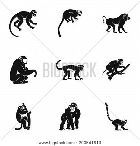 Species of monkey icon set. Simple set of 9 species of monkey vector icons for web isolated on white background