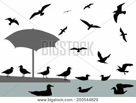 Silhouettes of gulls flying and floating on water