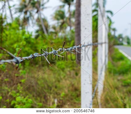 Concrete Posts Lined Up Build A Fence Of Barbed Wire In The Jungle