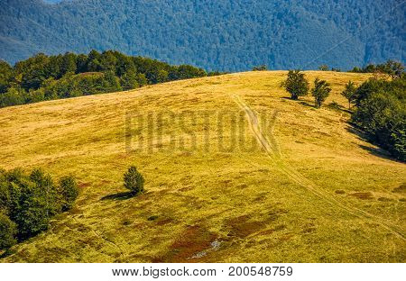 Path Through Alpine Meadow On Forest Background